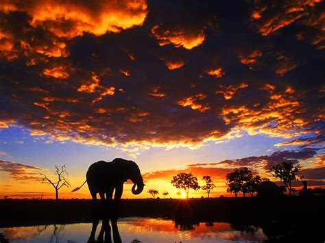 cool elephant wallpaper elephant wallpaper and background 1600x1200 id 105857
