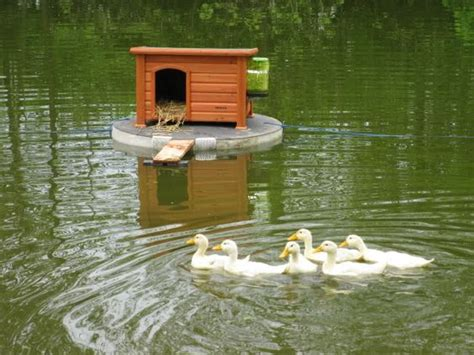 floating duck house duck houses on ponds here s a pic of the duck house floating on the pond with them