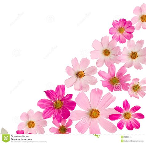 beautiful videos beautiful floral border stock image image of joyful