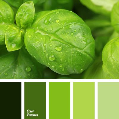 green monochrome color palette color palette ideas