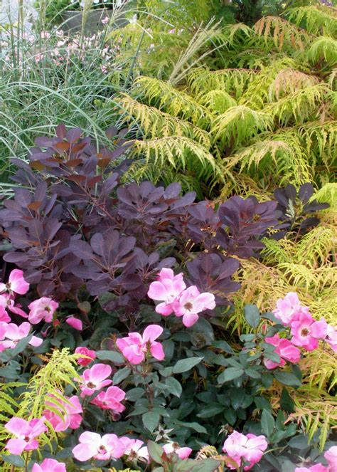 burgundy plants and flowers hgtv