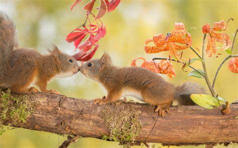 libro animal seasons squirrels autumn squirrels