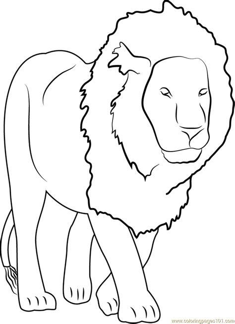lion coloring page pdf lion coloring page free lion coloring pages