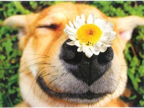 puppy with flowers with flowers www imgkid the image kid has it