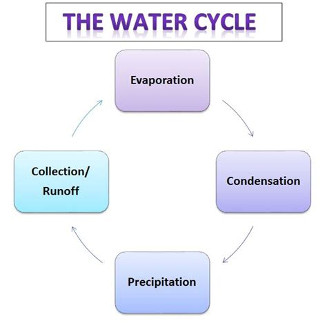 cycle of flowchart learning ideas grades k 8 the water cycle with ms frizzle