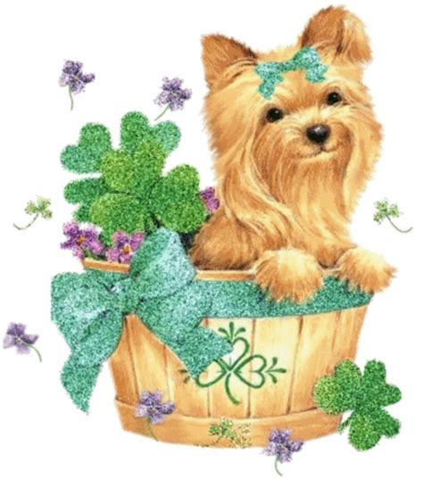 yorkie signs of labor st s day yorkie st s day myniceprofile