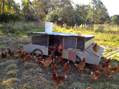 Movable Kitchen Islands egg mobiles i have loved milkwood permaculture