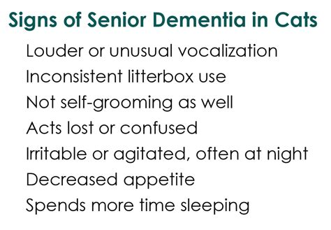 can dogs get dementia a tonk s err tale can your pet get alzheimer s