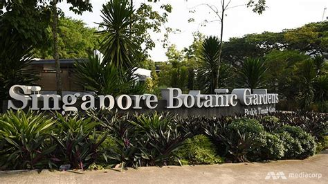 Night Walk On The Jungle Boardwalk Of Singapore Botanic Singapore Botanic Gardens