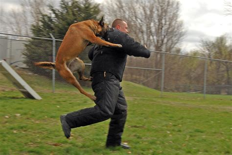 cop dogs file attack jpg wikimedia commons
