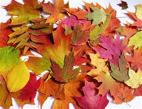 fall leaves decorations autumn table decorations autumn wedding decor