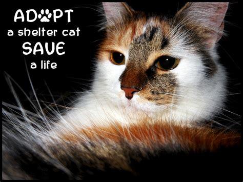 adopt a near me where to adopt a kitten near me pets world