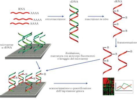 libreria cdna librerie genomiche biotecnologie microbiche appunti di