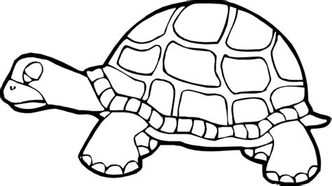 Turtle Coloring Pages Free Printable Pictures Coloring Turtle Coloring Page