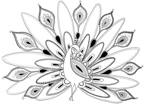 simple peacock coloring page peacock coloring pages images coloring pages pinterest