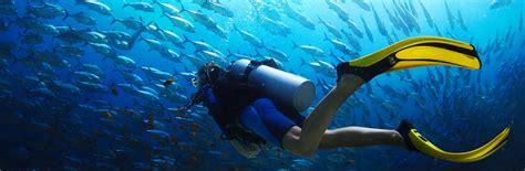 dive a home dive hq wellington