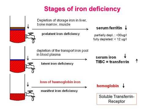 iron deficiency anemia american family physician microcytic oloom