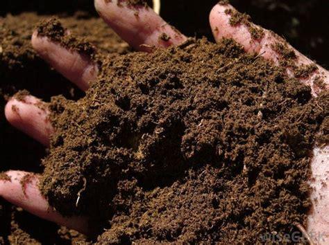 concimazione tappeto erboso concimazione fare giardinaggio come realizzare la