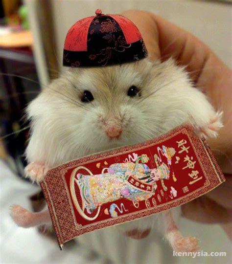 lady j s psychic astrology zone chinese zodiac rat