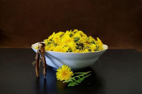 tarassaco in cucina tarassaco in cucina 7 ricette per gustarlo al meglio
