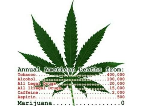 Recorded Deaths From Marijuana What Are The Rates Each Year For Tobacco And Marijuana Yahoo Answers