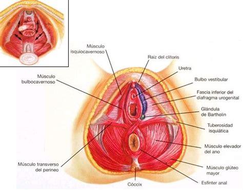 libro el perine femenino y atenci 243 n de enfermer 237 a al anciano con incontinencia urinaria medwave