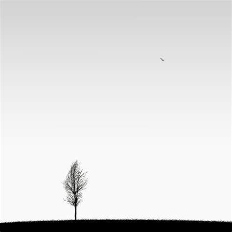 minimalist black and white photography by hossein zare bored panda