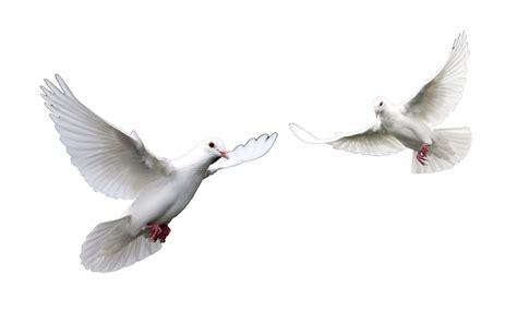 imagenes de espiritu santo el espiritu santo paloma related keywords el espiritu