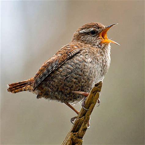 comment apprendre 224 reconna 238 tre le chant des oiseaux