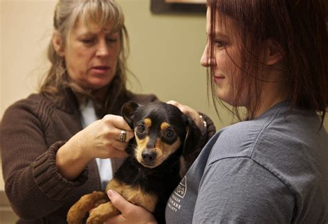 portland humane society dogs oregon humane society rescued dogs to foster homes oregonlive