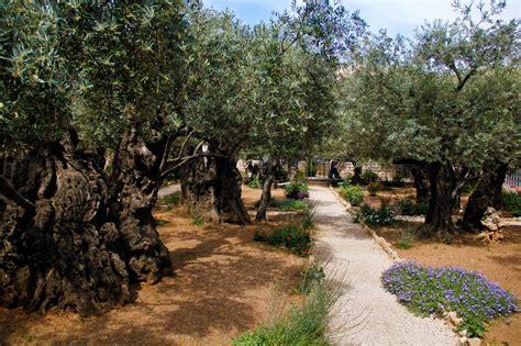 Garden Of Gethsemane Images by The Garden Of Gethsemane It S A Beautiful Gospel