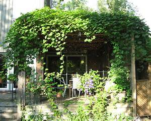 Vine Covered Pergola by Vine Covered Pergola Emily S Garden