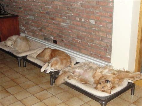 golden retriever beds golden retriever beds kuranda beds