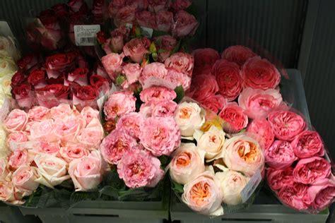 Garden Of Wholesale Garden Roses Wholesaleuvuqgwtrke