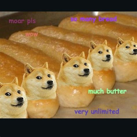 What Breed Is Doge Meme - 136 best doge