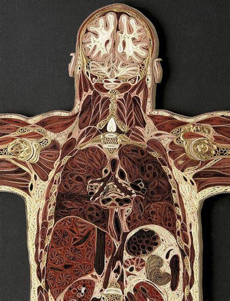 man sections paper artist lisa nilsson s anatomical art work