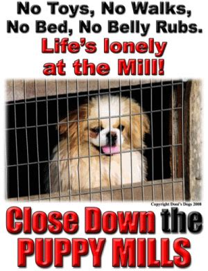 stop puppy mills stop puppy mills quotes