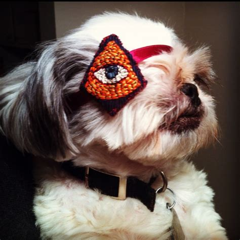 eye patch for dogs a eye patch for my one eyed shih tzu embroidered by