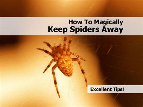 how to magically keep spiders away