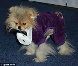 vanderpump dogs vanderpump breeds picture