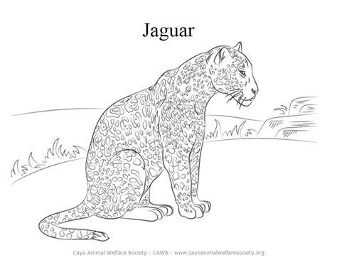 realistic jaguar coloring pages jaguar animals coloring pages jaguar best free coloring