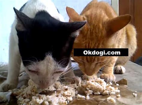 Makanan Kucing Kaleng pilih makanan basah atau kering untuk kucing simak