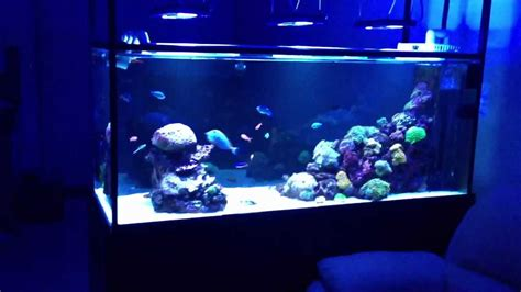 Ces Kodaks System For Removing Glow From Pet Photos by Equipment Overview On 6x2x2 5ft Mixed Reef Aquarium