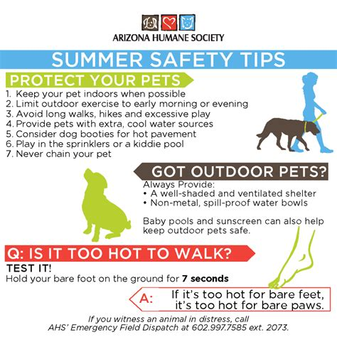 9 Tips On Keeping Your Outside Pet Safe From The Cold by Summer Pet Safety Tips Foundation
