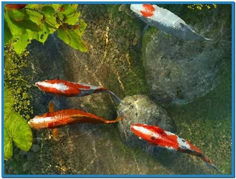 koi live wallpaper full version free download for android koi fish 3d screensaver full version download free
