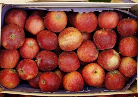 alimentazione antitumorale succo di mela 232 un potente antitumorale cibo salute