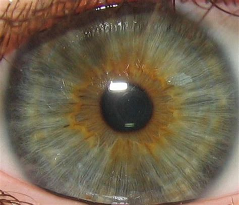 iris eye color green are the rarest eye color and are from the