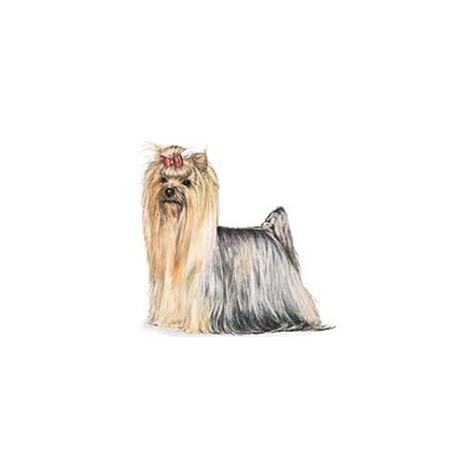 yorkie terrier clothes terrier accessories yorkie clothes carriers ask home design