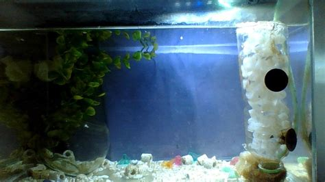 Handmade Aquarium - how to make a cheap and easy diy aquarium filter step by