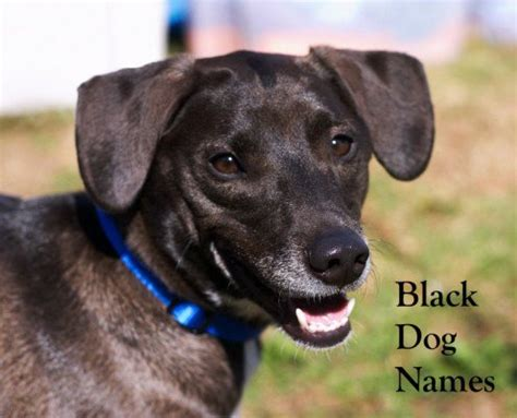 names for a black black names